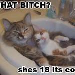 Loli Cat