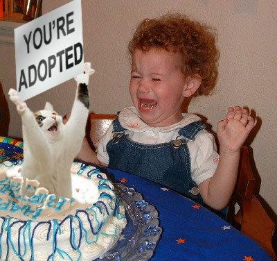 cakecat