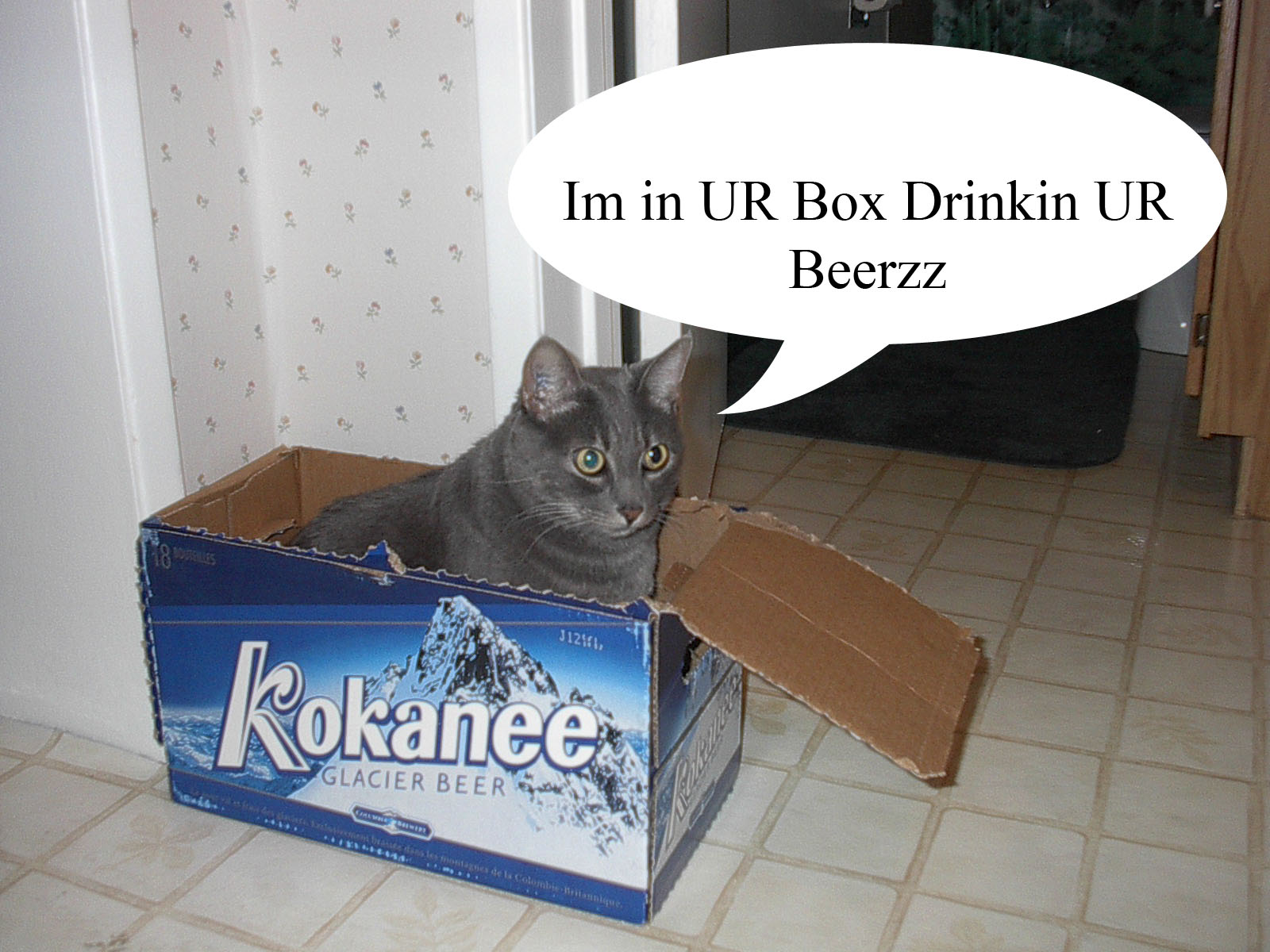 catz91
