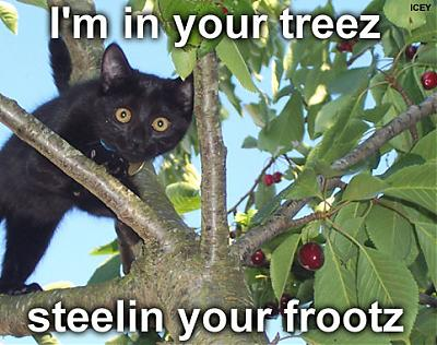 frootz