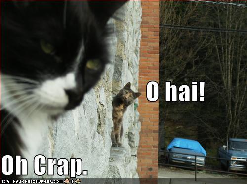 funny-pictures-cat-hi-crap