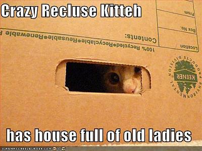 funny-pictures-crazy-recluse-cat