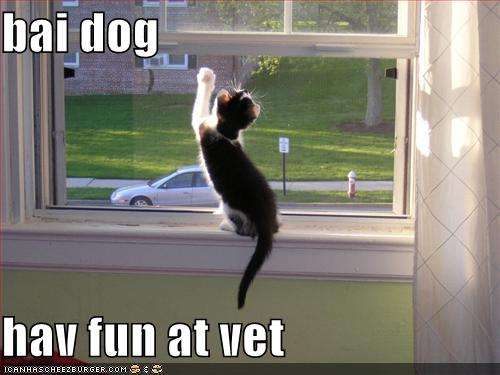 funny-pictures-kitten-waves-goodbye-to-dog