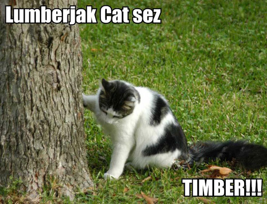 lumberjak-cat-sez-timber